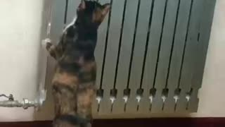 my little kitten dont know when to jump