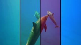 Animals Compilation 2021 Cute Animals 🐶🐱🐭🐹 Funny Animal Videos