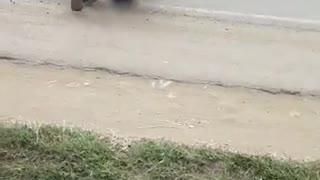 Perigo sobre rodas