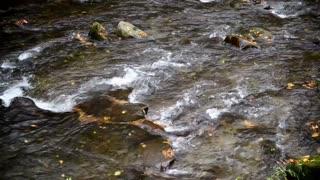 Tennessee Stream Flow