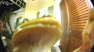 Amphibious Visitor Rings Doorbell