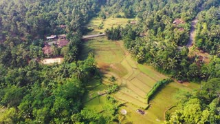 Beautiful mountains with paddy fields and a lots of trees