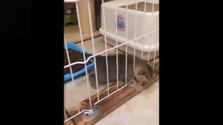 Funniest Cute Animal Videos