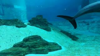 Trip Inside Under Water Aquarium Dolphins