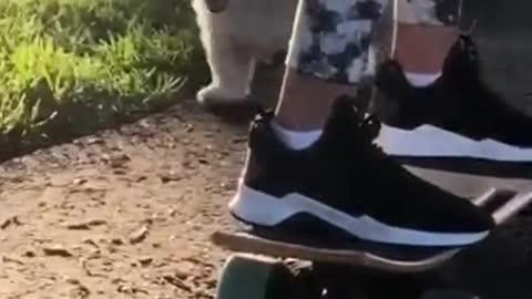 Cute doggo tripping on the road
