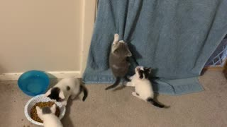 Cutest kittens ever playing