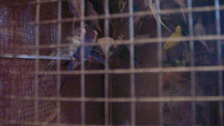 My 2s parrots