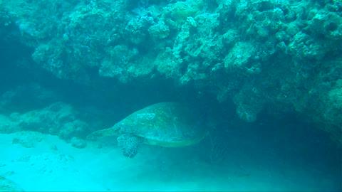 Turtle Canyon Sleeping spot
