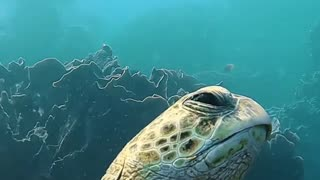 This green sea turtle was a little sleepy  