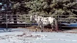 Stallion approaches human