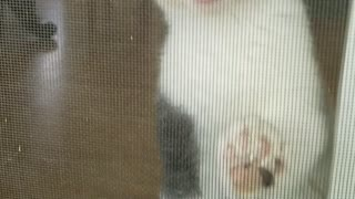 Cat cant come outside so she cries at door