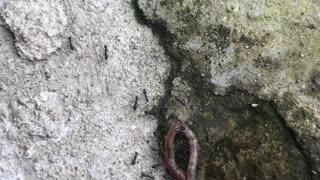 Ants Worm American Republicans Democrats