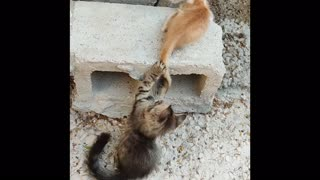 Cute Sweet Adorable Kittens and Cats