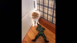 Cute Cat Gets Very Scared Of The Toy Soldier ! Really Cute.