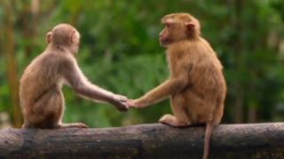 Funny video monkey fantastic funny
