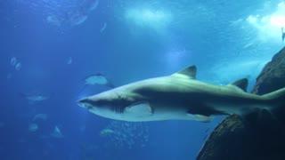 Underwater Footage, Great Scene!