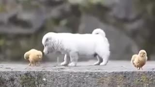 la amistad sin limites