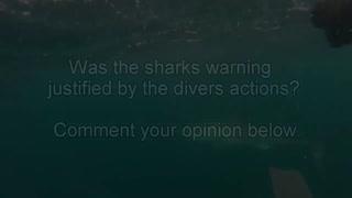 Great White Shark Attacks Diver