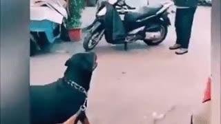The smart dog 🤔