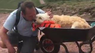 Hombre lleva a su perrito moribundo a su montaña favorita en una carretilla
