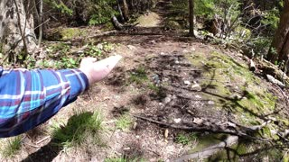 Squirrel jumping on my hand in slow motion.