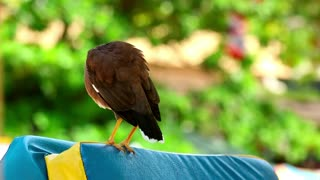 Bird cleaning his feathers - With great music