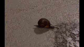 A snail's evening stroll