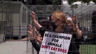 'Don't eat eggs', protesters urge at Tokyo Olympics
