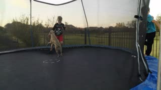 Tank the Carolina Dog playing with kids