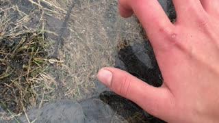 Dog Destroys Frozen Puddle