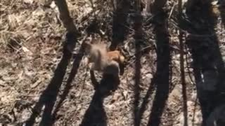 Hungry squirrels from Siberia