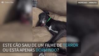 Cão fica 'possuído' após dormir