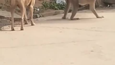 Super funny animal video that will make you laugh|you can't control laughing