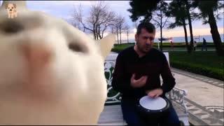 THE MOST FAMOUS CAT OF TIKTOK CAT DANCES ARABIC MUSIC avril 2021
