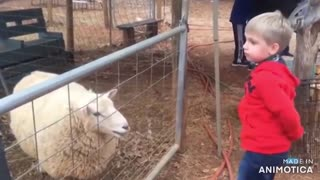 Adorable Kids Playing with Animals