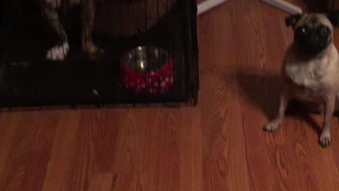 Synchronized Dog Treat Eating