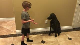 Boy trains dog new tricks!