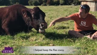 Do Cows Hug? Incredible Video Shows That They Can & Do