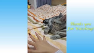 Funny animals most funny