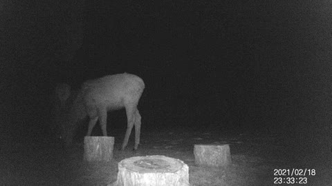 Deer Peering Out From the Darkness!