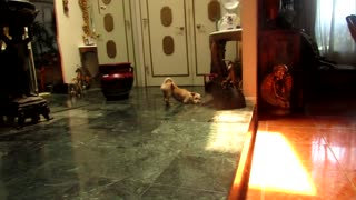 """The movie """"300"""" style fight between puppy and cat"""