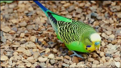 bel oiseau perroquet