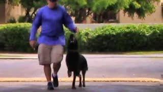 ONLINE Dog Training! quick and easy way!