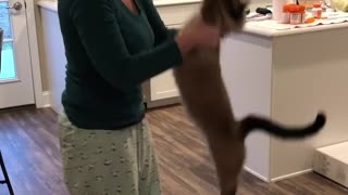 Unique cat stretches before getting picked up