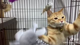 Dog And Cat Reaction To Toy
