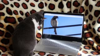 Pet searching a sound