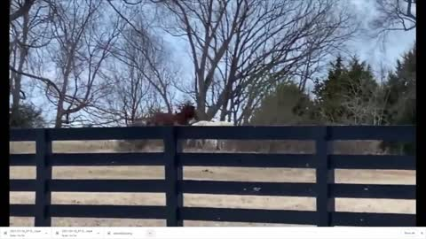 Horses Playing Together