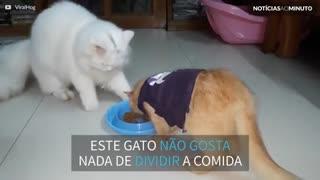 Este gato nunca aprendeu a dividir comida!