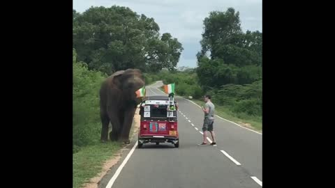Elephant Knocks Over Car Like It's A Hot Wheels