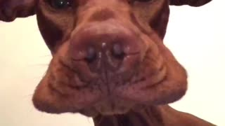 Precious Pooch Makes Goofy Face